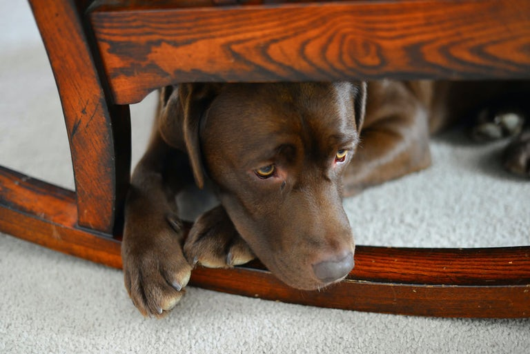 Dog training tips for separation anxiety