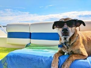 labrador sunglasses beach