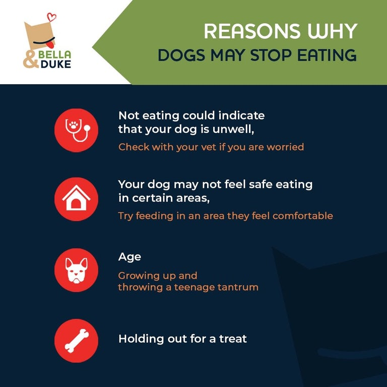 reasons for a fussy dog, reasons for a dog not eating