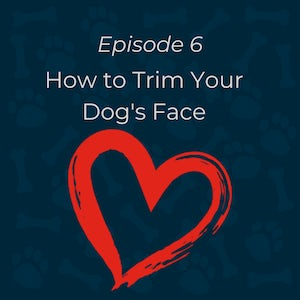 how to trim your dog's face