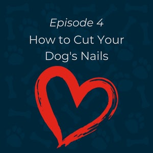 how to cut your dogs nails featured image