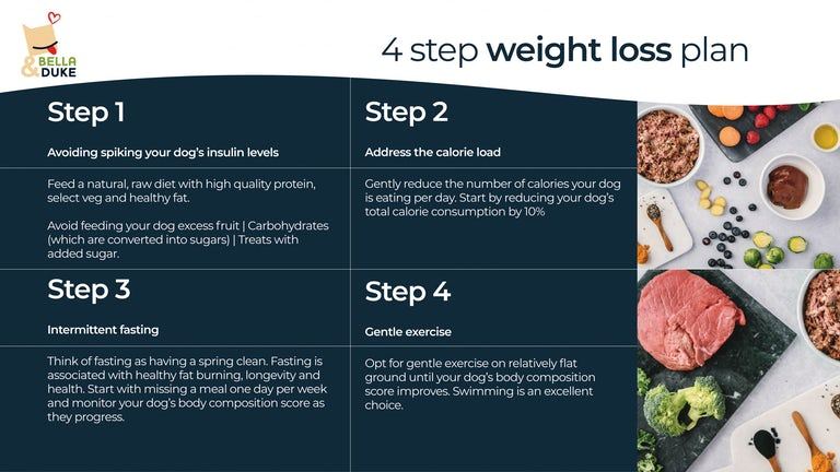 obesity in dogs a 4 step dog weight loss plan