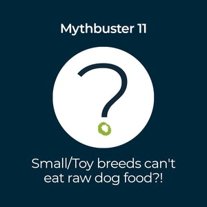 can small dogs eat raw food myth buster featured image
