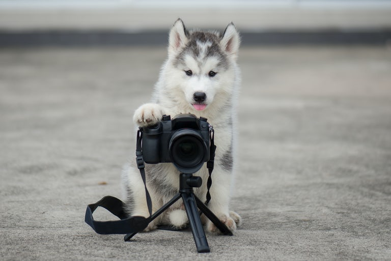 pet photography tips