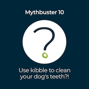 Use Kibble to Clean Your Dogs Teeth - Mythbuster 10